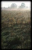 Felső-tiszai hullámtéri hagyásfás gyep hajnalban