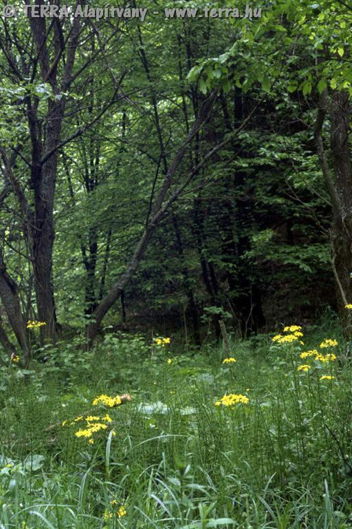 12 Kutyafa fák és cserjék fajai